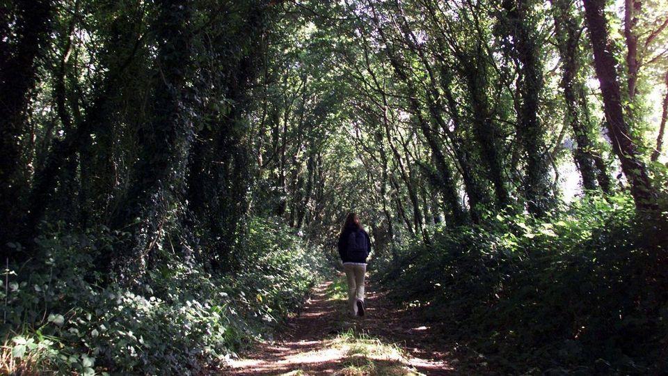 El Camino Inglés se consolida y crece a un ritmo mayor que las demás rutas