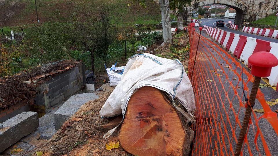 Amigos da Terra denuncia la tala de un árbol centenario durante las obras de la 0U- 105en Seixalbo