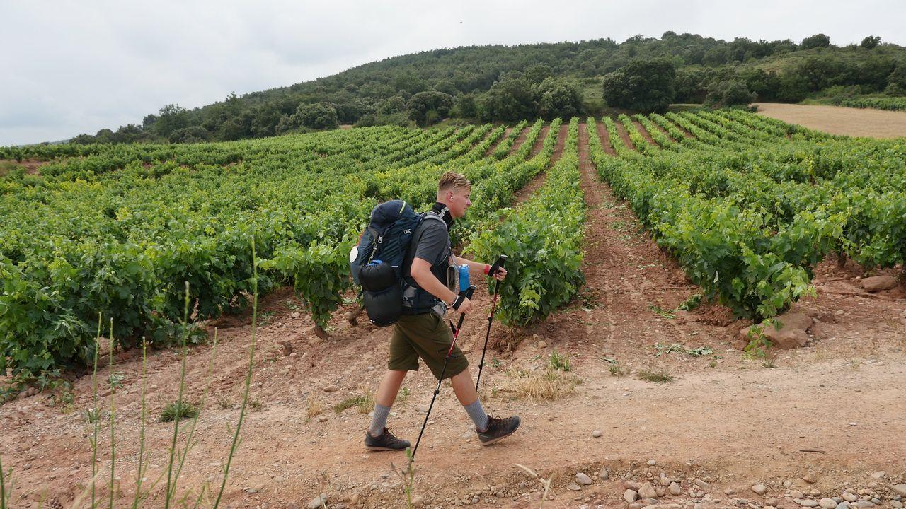 Seguimos viendo vides en La Rioja