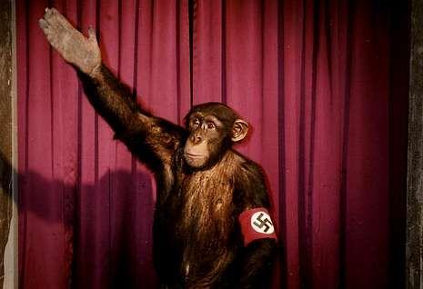Ofensiva israelí en un barrio de Gaza.<span lang= es-es >Antecedente</span>. Rudolph Herzog, autor del libro, rodó en el 2006 el documental «Heil, Hitler, el cerdo está muerto», en el que el dictador alemán ya era objeto de burla en escenas como esta.