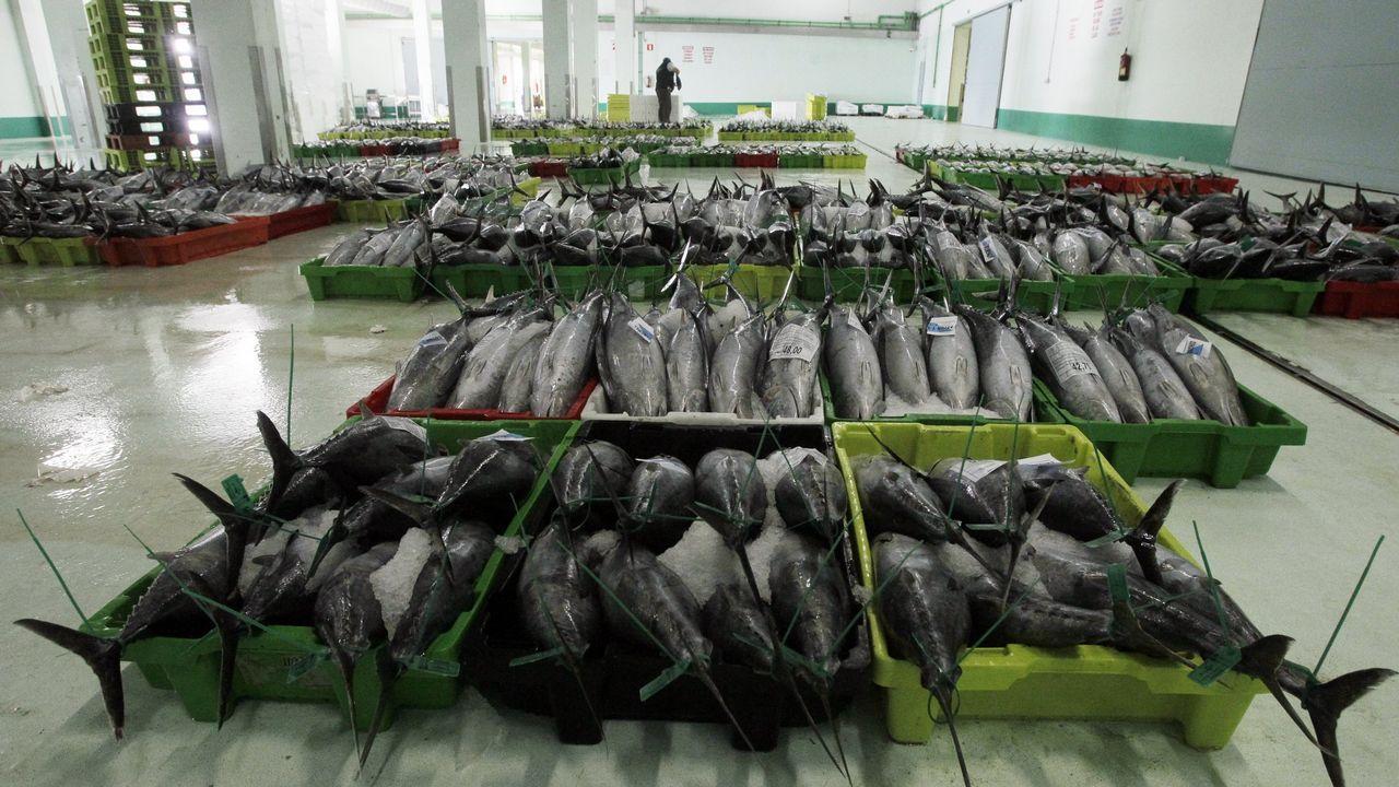 ¿Por qué es importante criar pulpos en cautividad?.A estas alturas del año, la flota pesquera dispone de cuota para la captura de jurel y merluza