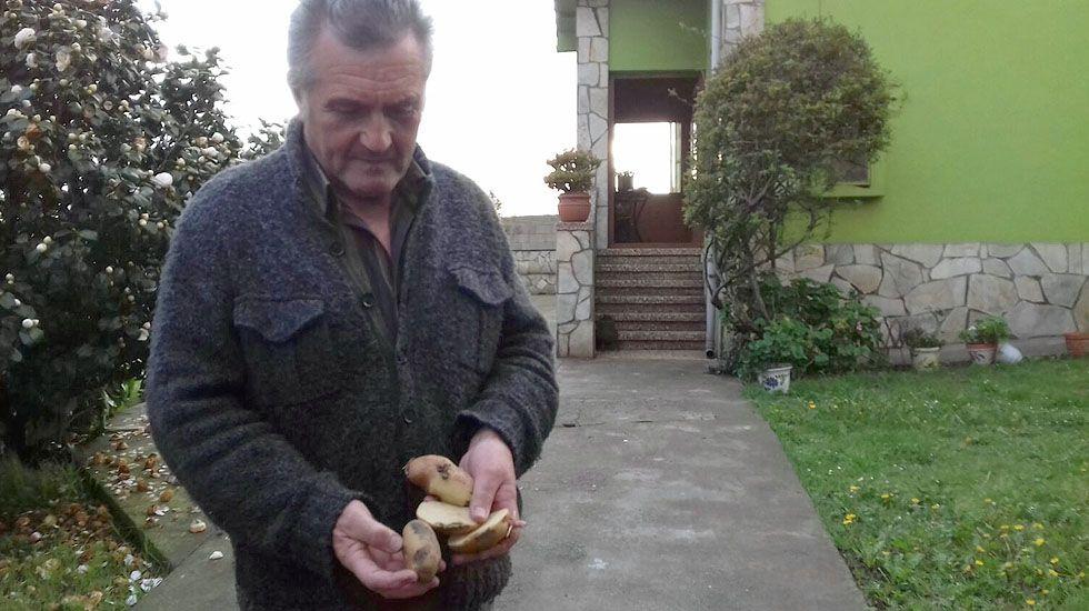 El gijonés Tino Llano, de Monteana, muestra las patatas afectadas por la polilla guatemalteca.El gijonés Tino Llano, de Monteana, muestra las patatas afectadas por la polilla guatemalteca