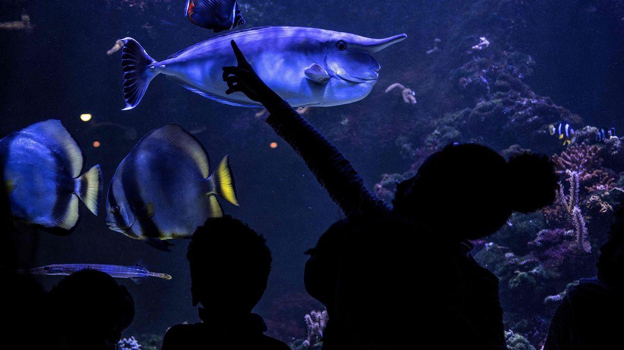Visitantes en el acuario tropical de París