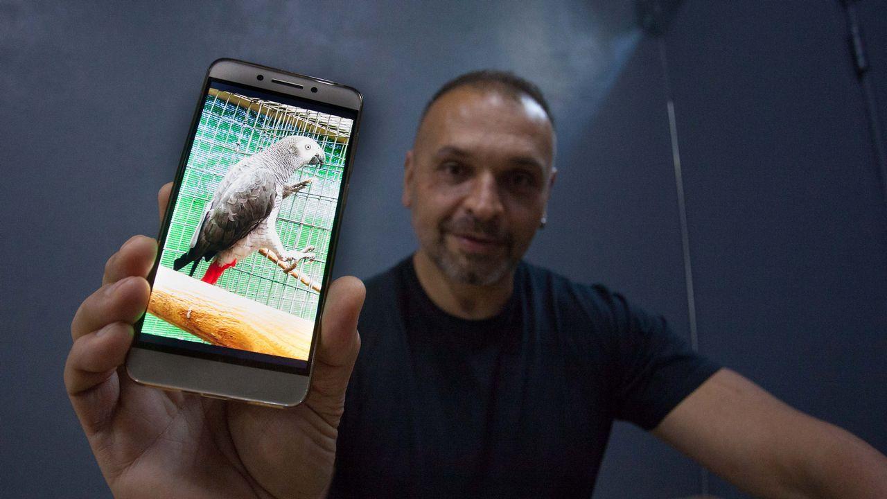 Roban cuatro aves exóticas valoradas en 4.000 euros en una finca de Sarria