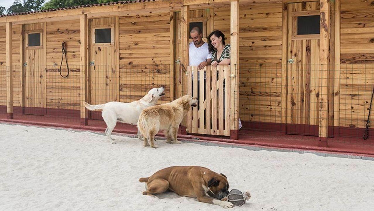 El primer hotel canino de O Baixo Miño cuelga el cartel de completo por Navidad.El temporal ha provocado un fuerte oleaje en Gijón
