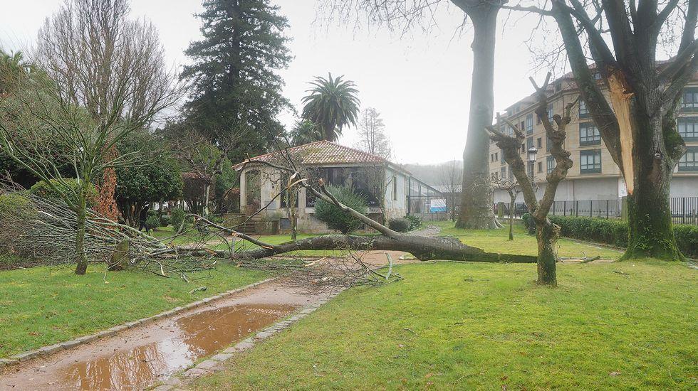 Los efectos del temporal en la Alameda de Santiago, cerrada.Árbol caído en el jardín botánico de Padrón