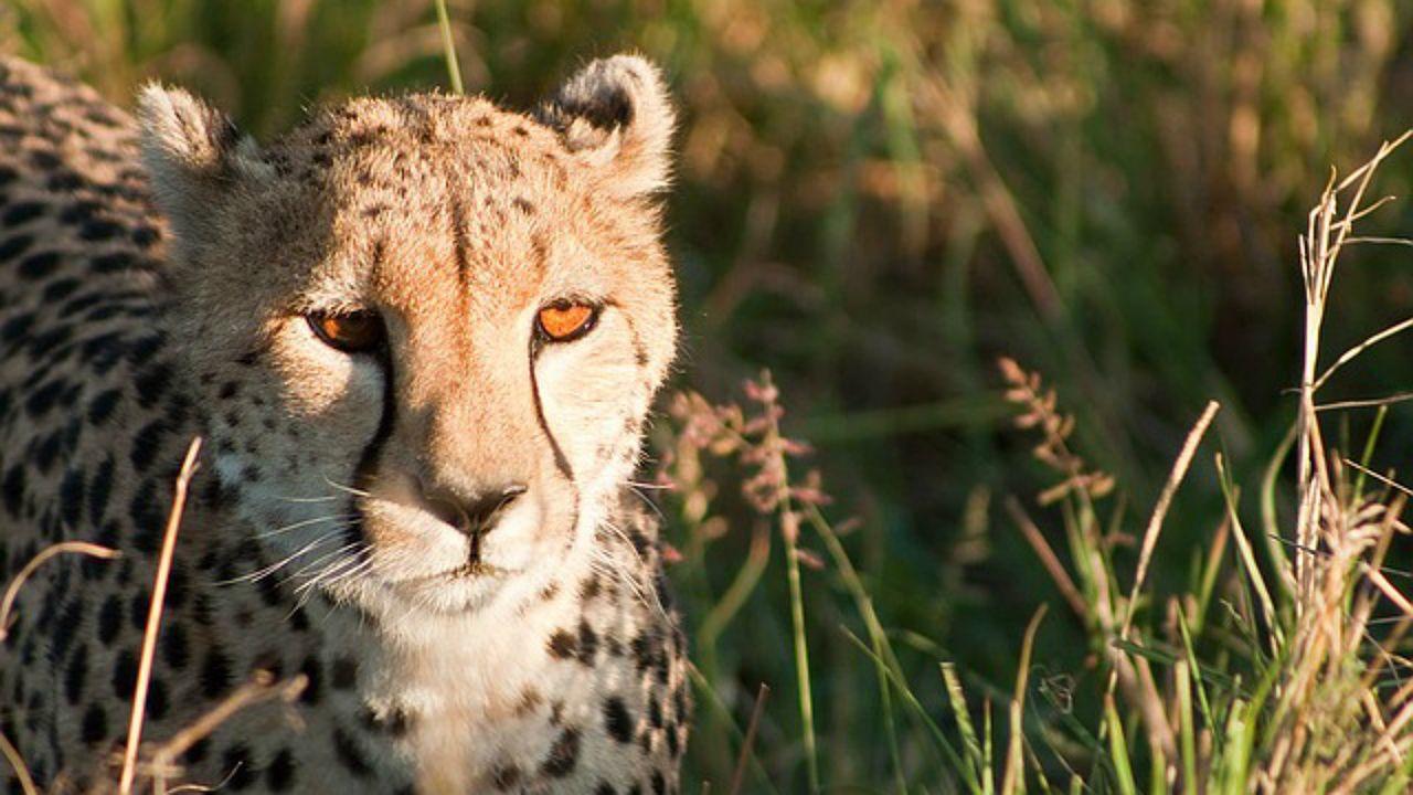 Parque Nacional Masai Mara