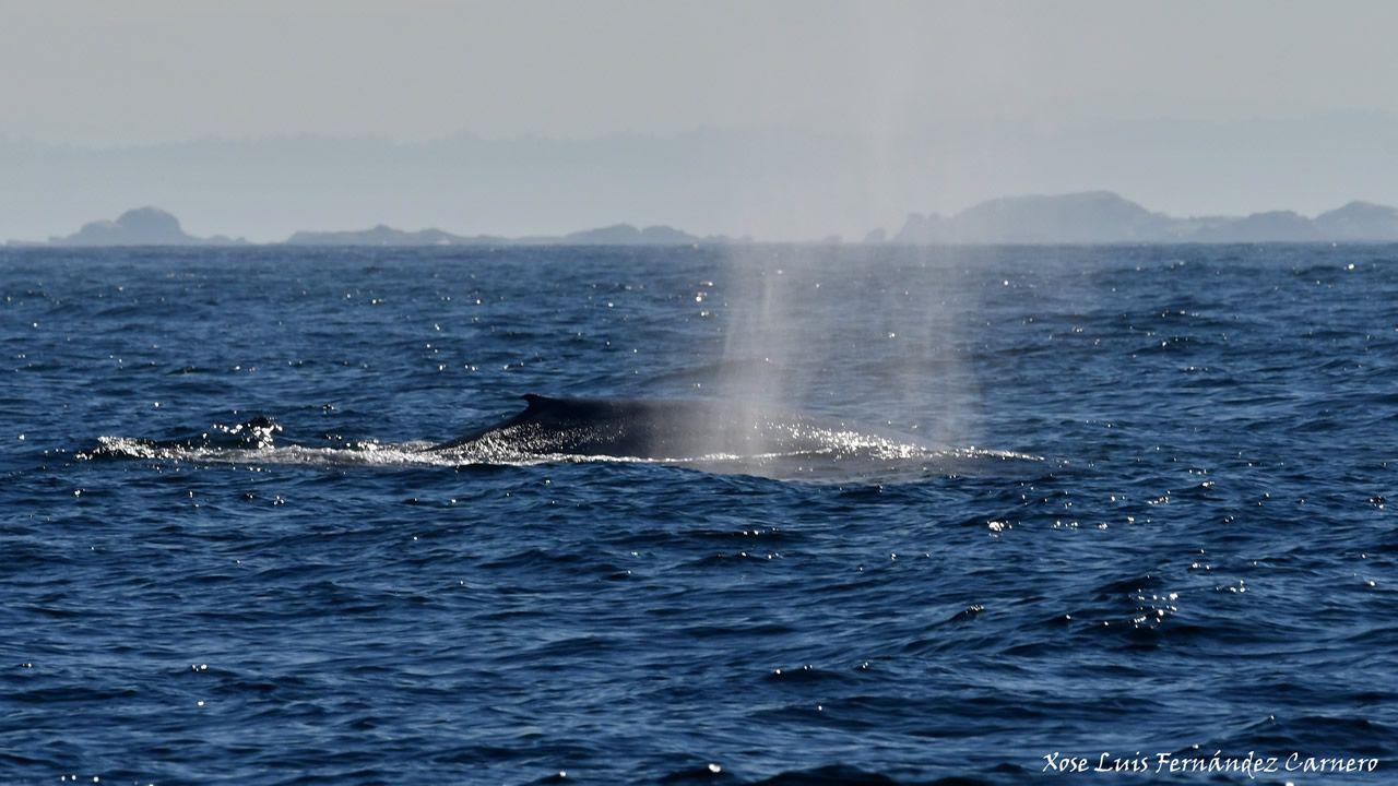 Atasco en el acceso a Oviedo.Es la primera vez en décadas que se ven dos ballenas azules juntas en aguas de Galicia