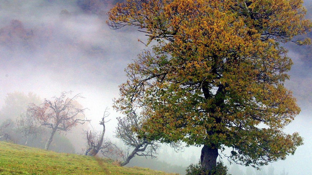 ¿Cómo se forman las nieblas de otoño?.