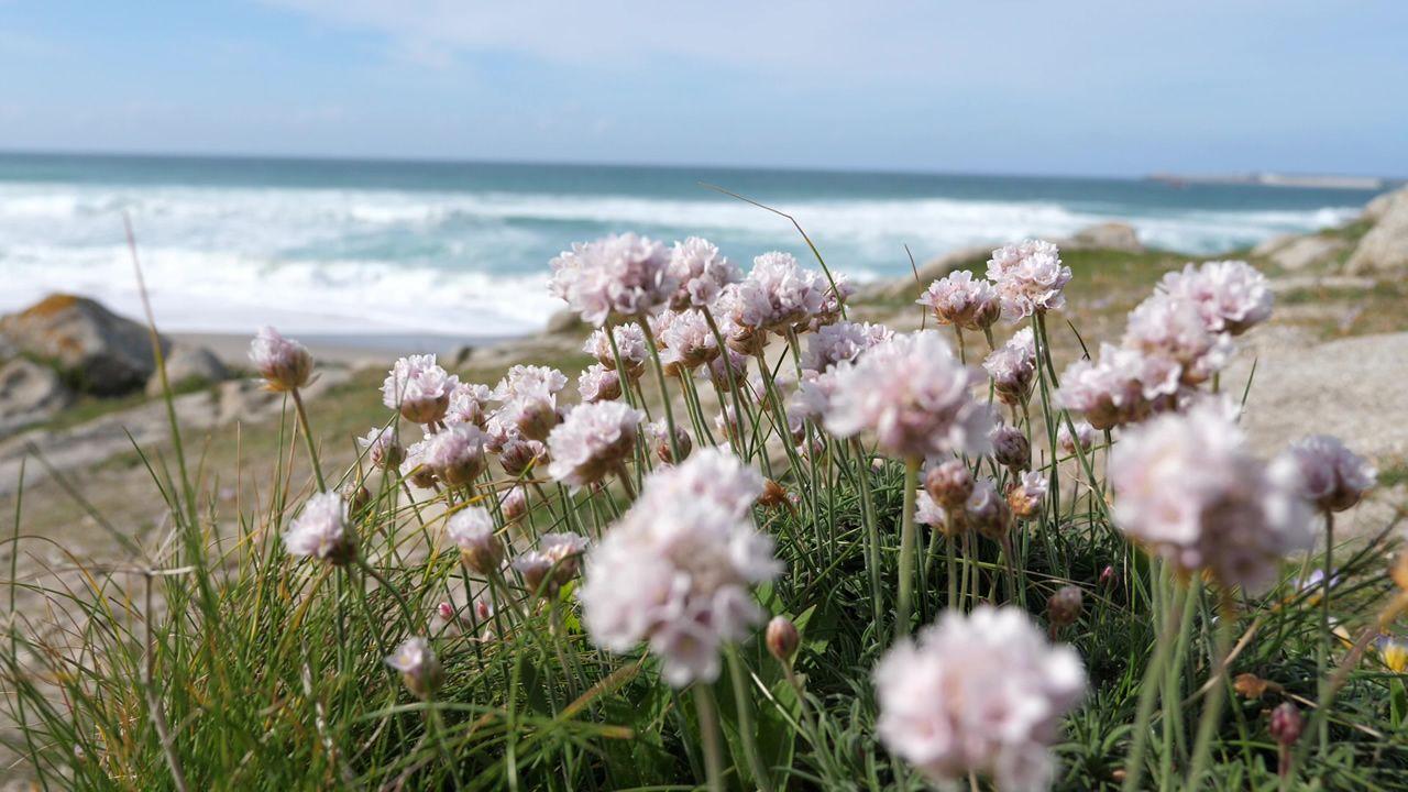La primavera colorea Galicia.Quim Torra y Elsa Artadi