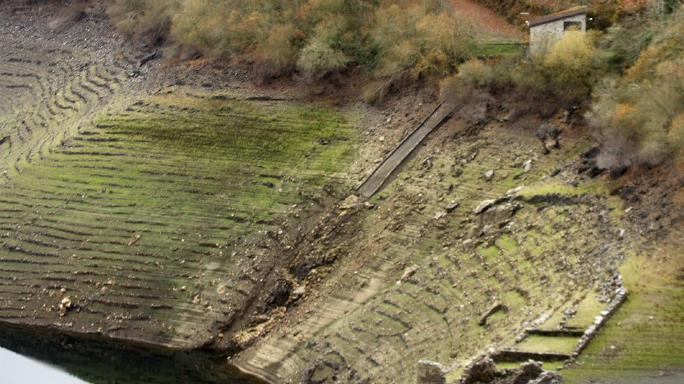 «O Avó», un eucalipto que sí pega sello.La marcha de los trabajadores de Alcoa, a su llegada a Oviedo