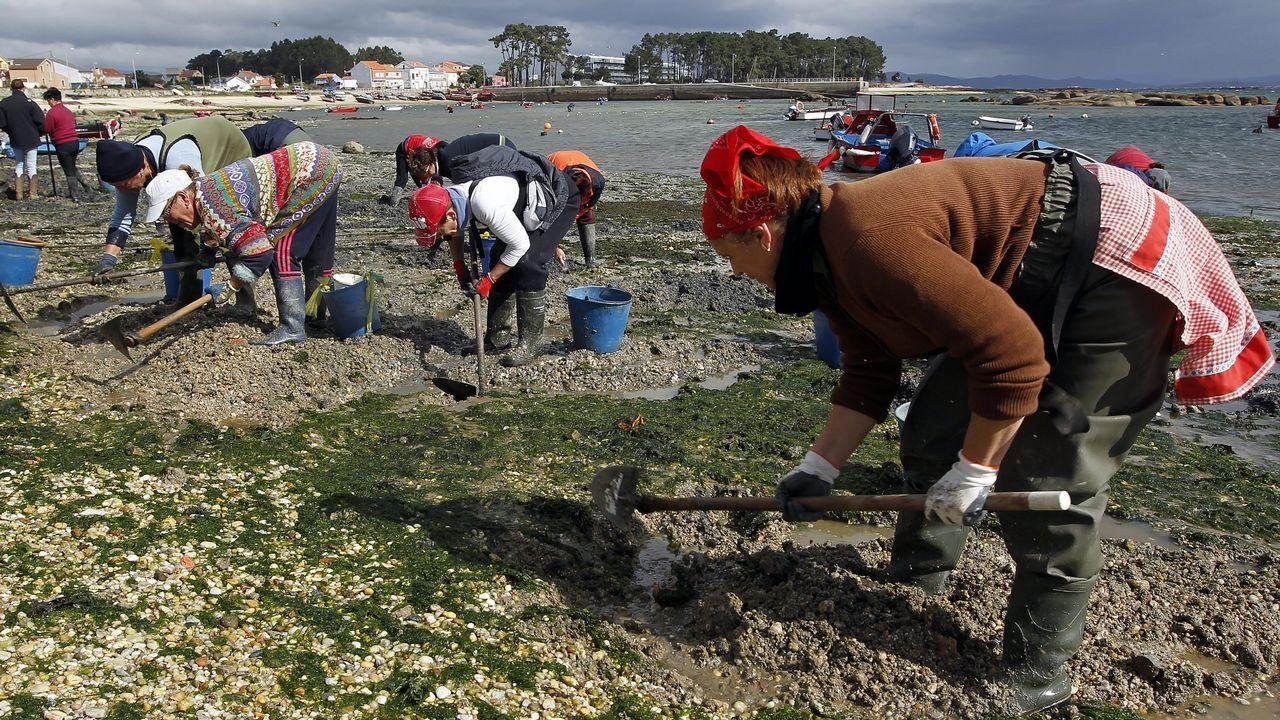 «As ameixas non son moras»: el alegato de las mariscadoras de Arousa
