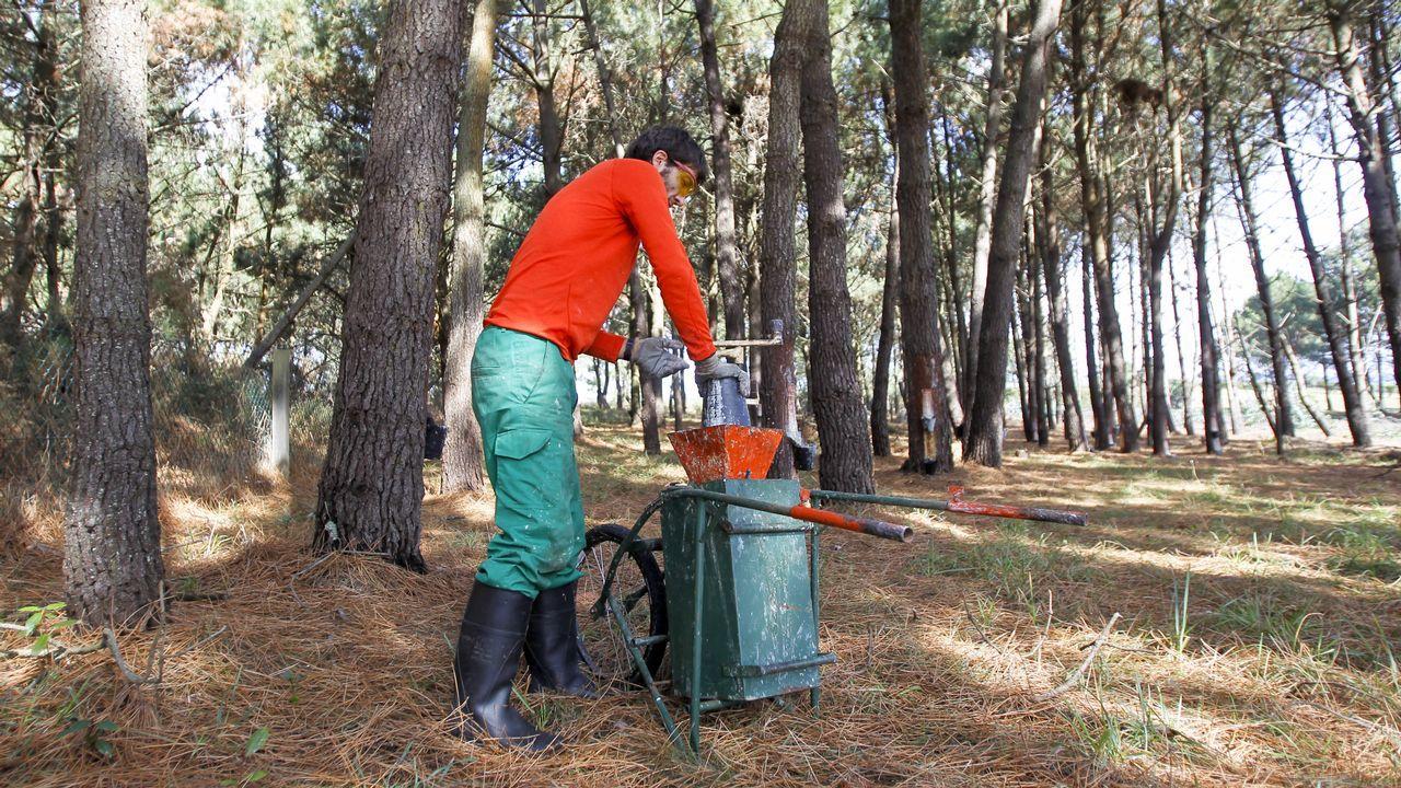Ortegal, potencia en resina de pino