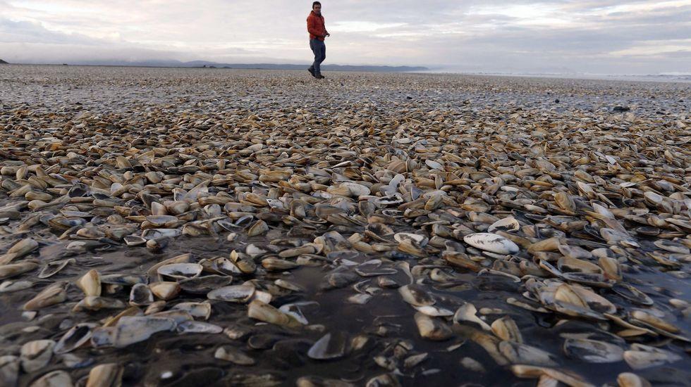 La marea roja invade la costa chilena.Viturro, Calvo, Krug, Hernández y Romero, los organizadores.