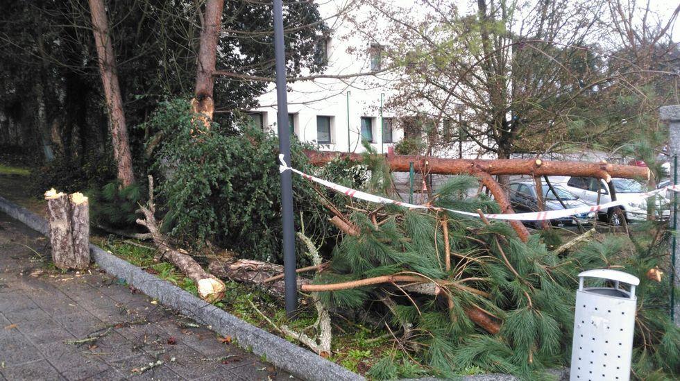 Árboles caídos en Ourense, en la zona de A Lonia