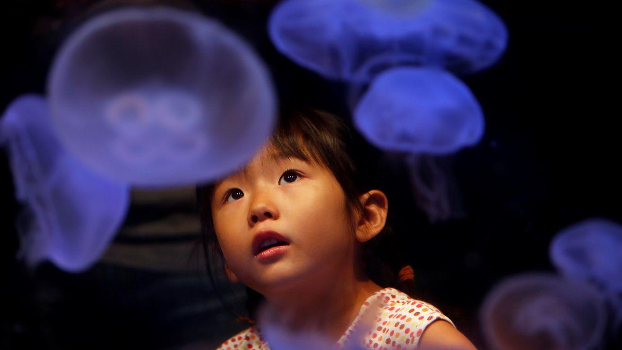.Una niña observa absorta un tanque con medusas en el Acuario Shinagawa de Tokio (Japón). El espacio dedicado a las medusas y sus cuatro tanques de agua es muy popular entre los visitantes al acuario