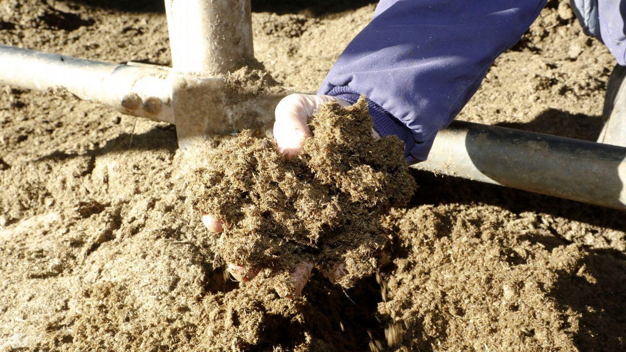 Una granja de O Páramo transforma el purín en camas para las vacas.Arcelor