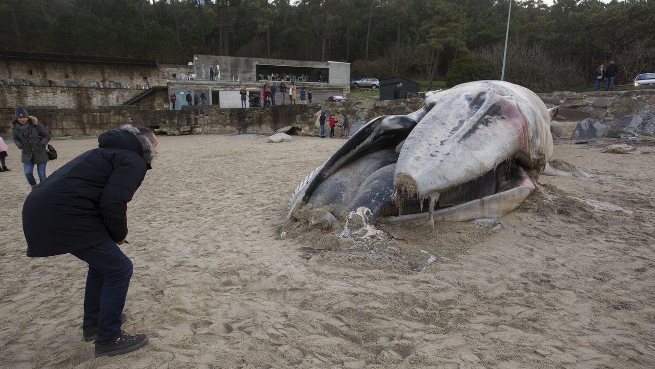 El último ejemplar apareció el pasado fin de semana en la playa de Balarés, en Ponteceso