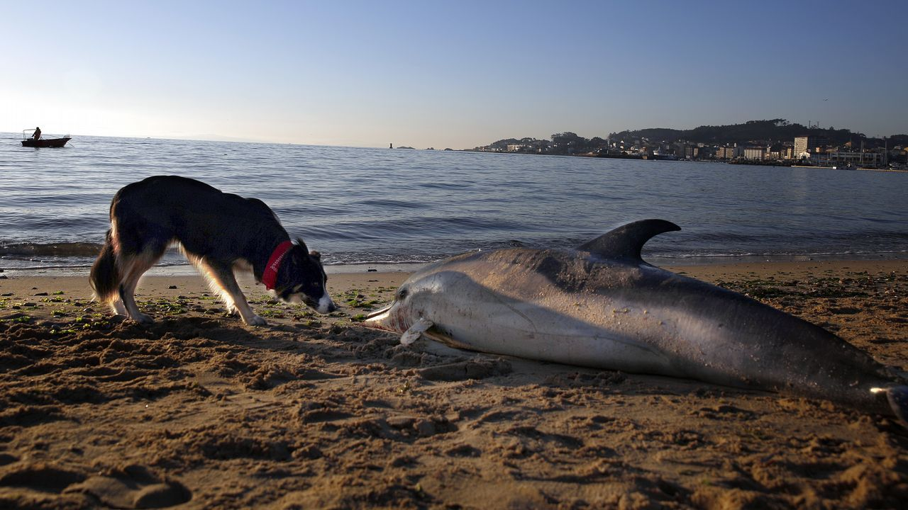Lo que nos dejan los temporales en las playas.Millones de anfípodos cubren la playa de Xagó, en Gozón
