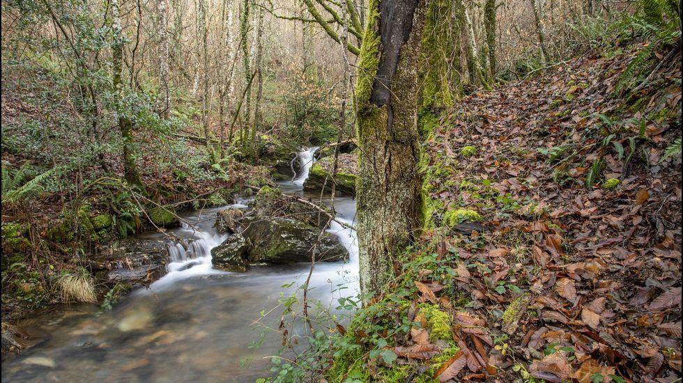 El camino discurre en buena parte entre bosques de ribera