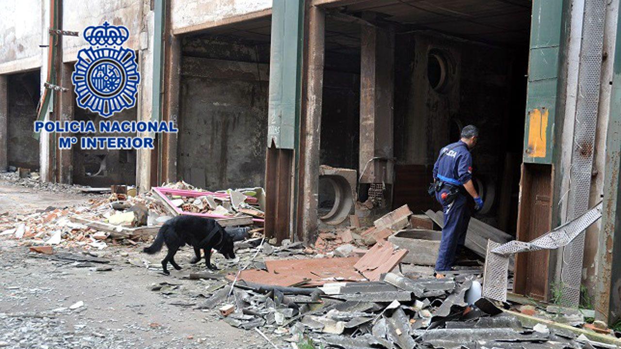 Un agente de la Policía Nacional y un perro de la Unidad de Guías Caninos durante la búsqueda de la vecina desaparecida en Contrueces, Gijón