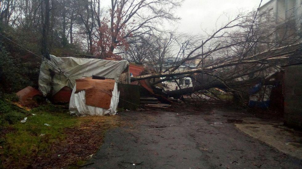 .Un árbol destrozó una chabola en Maside