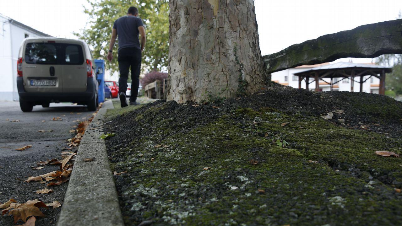 .Árboles levantando el pavimento