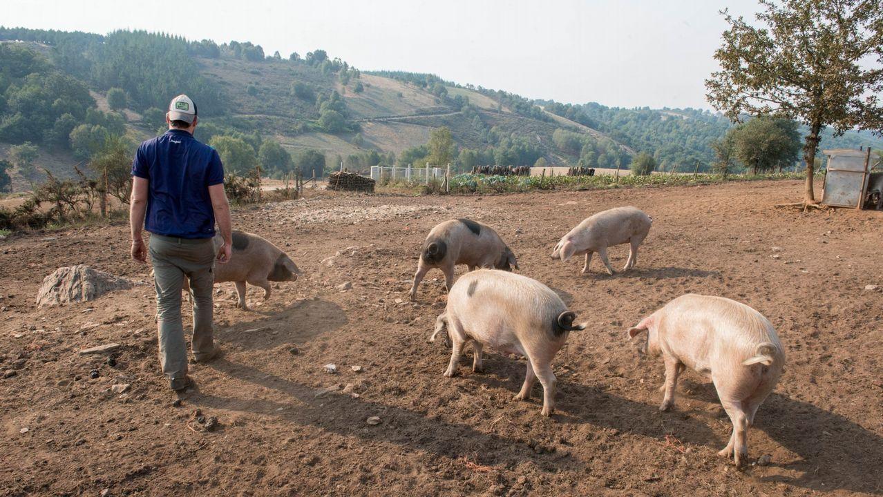Sesión de terapia con animales en Ardai
