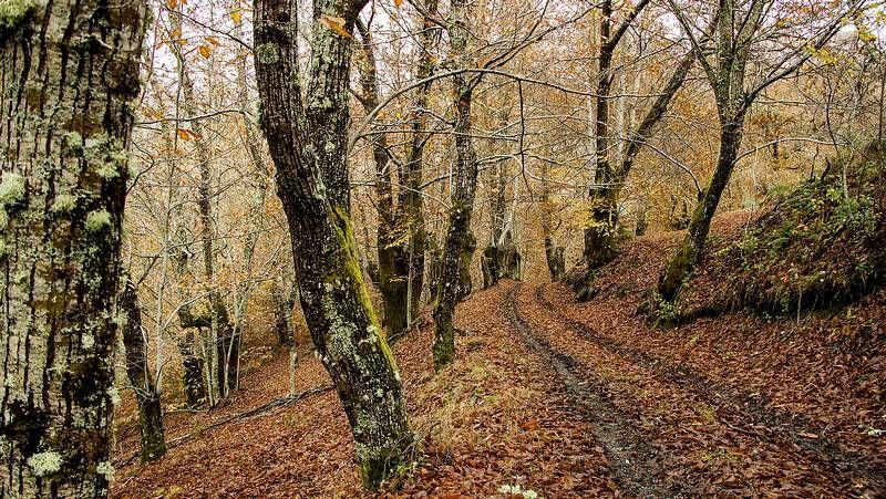 Imágenes de la ruta de Seceda a Lousadela.La maleza crece en el área recreativa de Val do Mao, cerca del santuario de San Eufrasio.