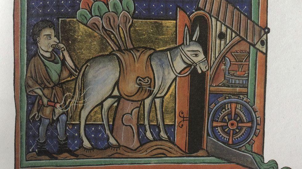.Ilustración relativa al asno en el bestiario del siglo XIII de la Biblioteca Bodley, Universidad de Oxford (MS. Bodley 764)