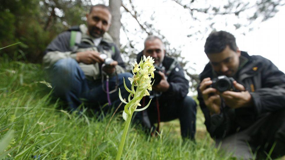 Una visita en imágenes al Carreiro do Castro de Seceda.Participantes en el bioblitz celebrado en la sierra de O Courel en el 2012 fotografían un ejemplar de orquídea silvestre en el Alto do Couto