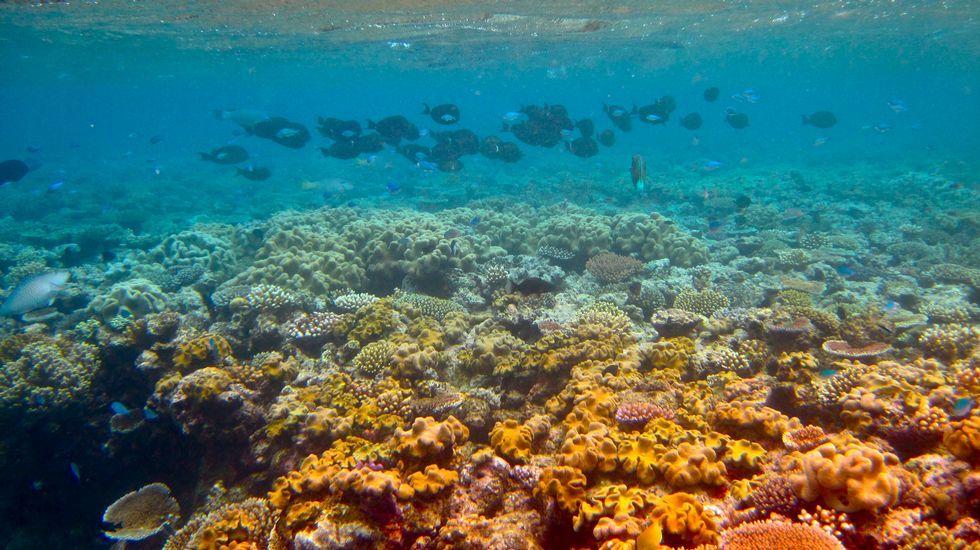 A Gran Barreira de corais australiana