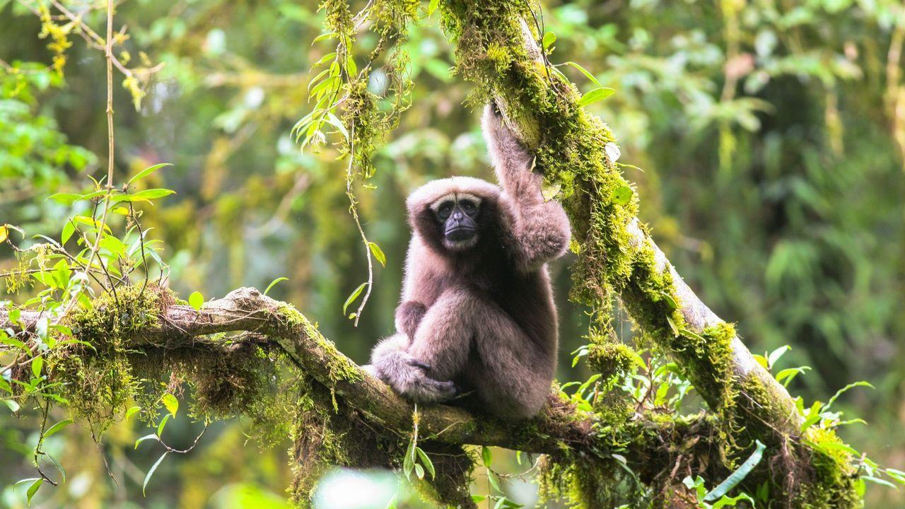 Algunas de las más sorprendentes especies descubiertas este año en el Mekong.Foto de familia de los Premios Oh! 2017
