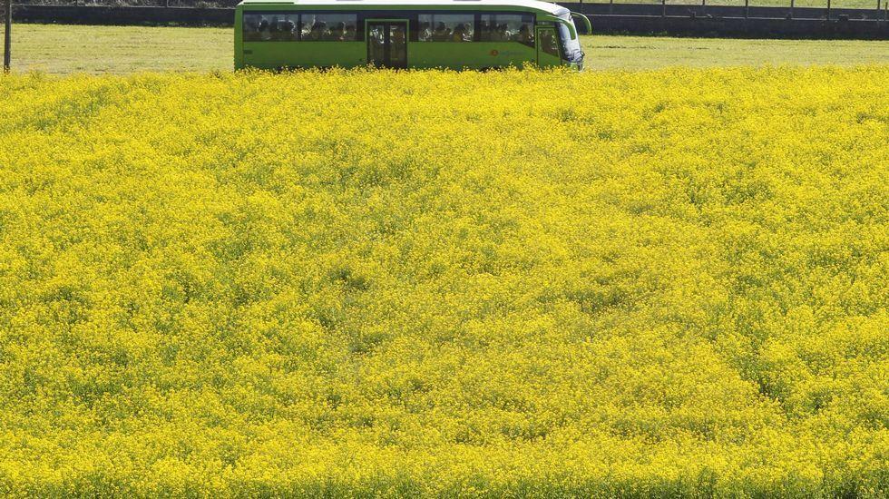 Un autobús a su paso por Teo