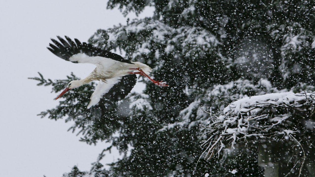 Cigüeña bajo la nieve