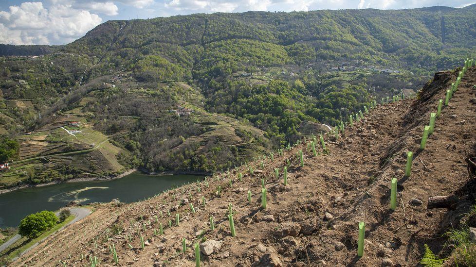 El atractivo de las Montañasde O Courel, el primer geoparque de la Unesco en Galicia.Presentación dunha edición anterior do certame Quiroga de Tapas