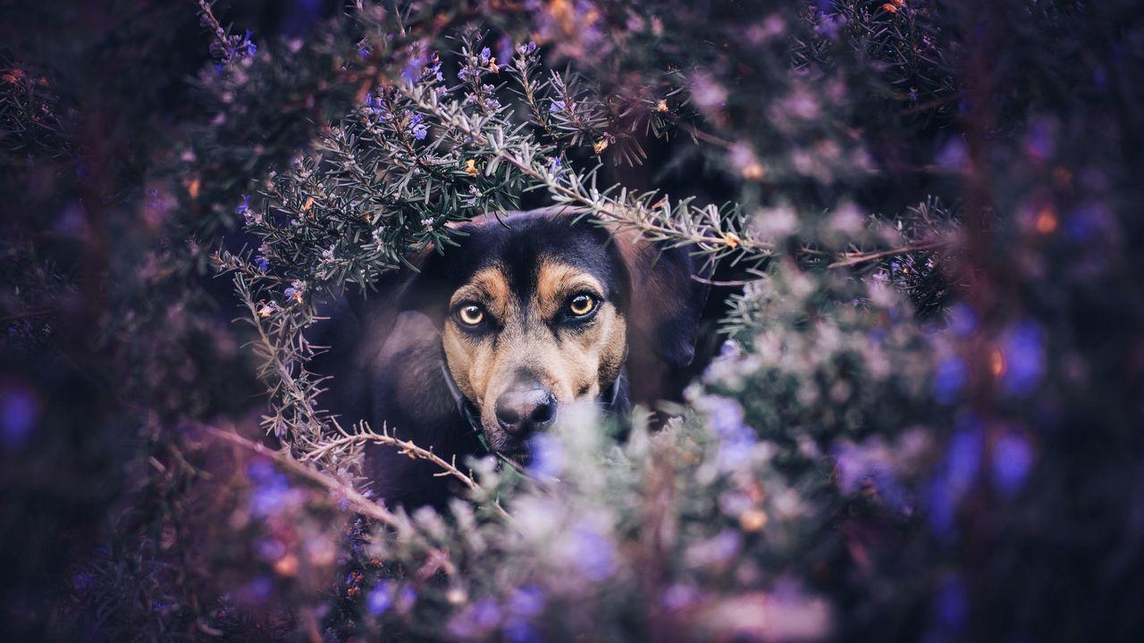 Photocall canino solidario en Vigo.Paula Echevarría posando en Instagram