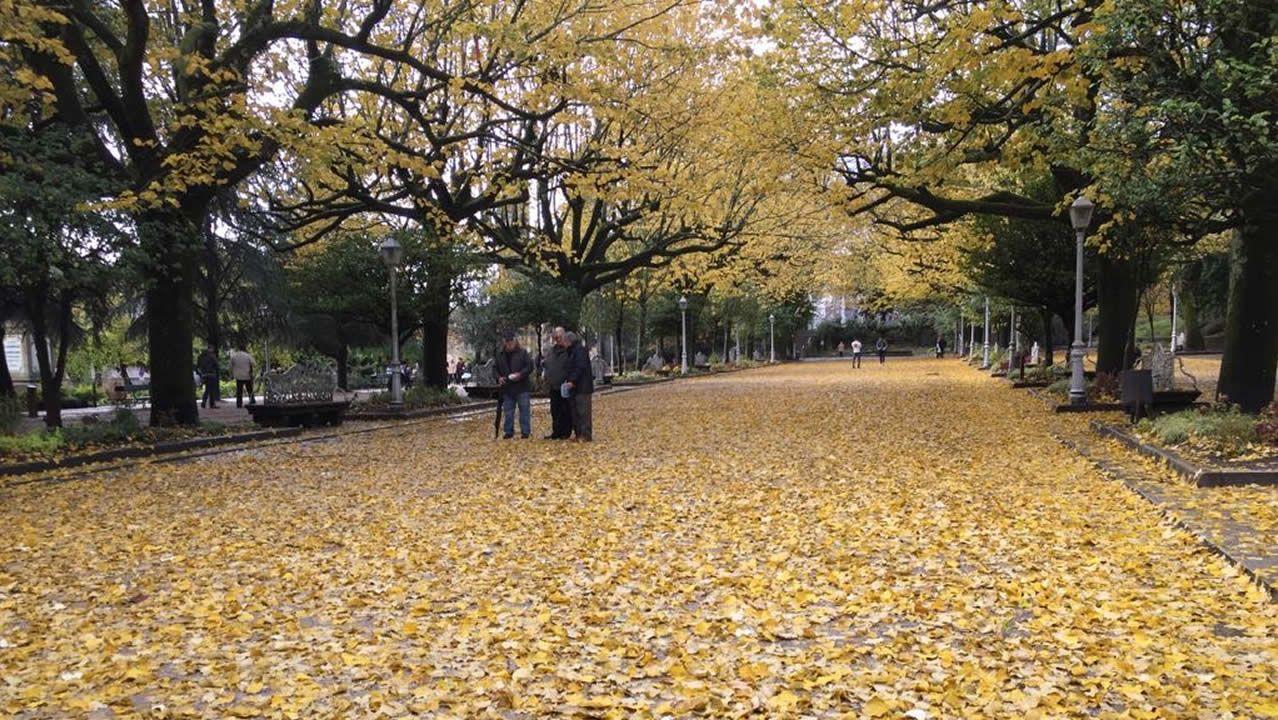 Un manto de hojas cubrió Santiago de Compostela