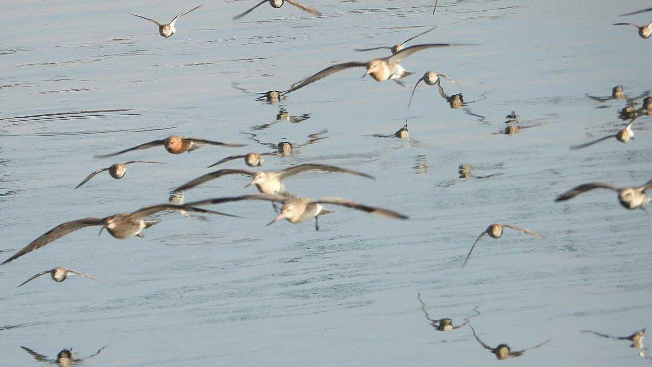 La ría de Aviés, escenario de un encuentro multitudinario de aves migratorias.Campaña de recogida de plásticos en la naturaleza dentro del proyecto ciudadano Libera