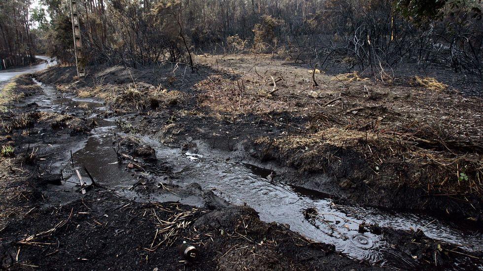 Jairo Domíngez, ganadero de Olelas, tiene que dar a sus vacas hierba que tenía para el invierno.