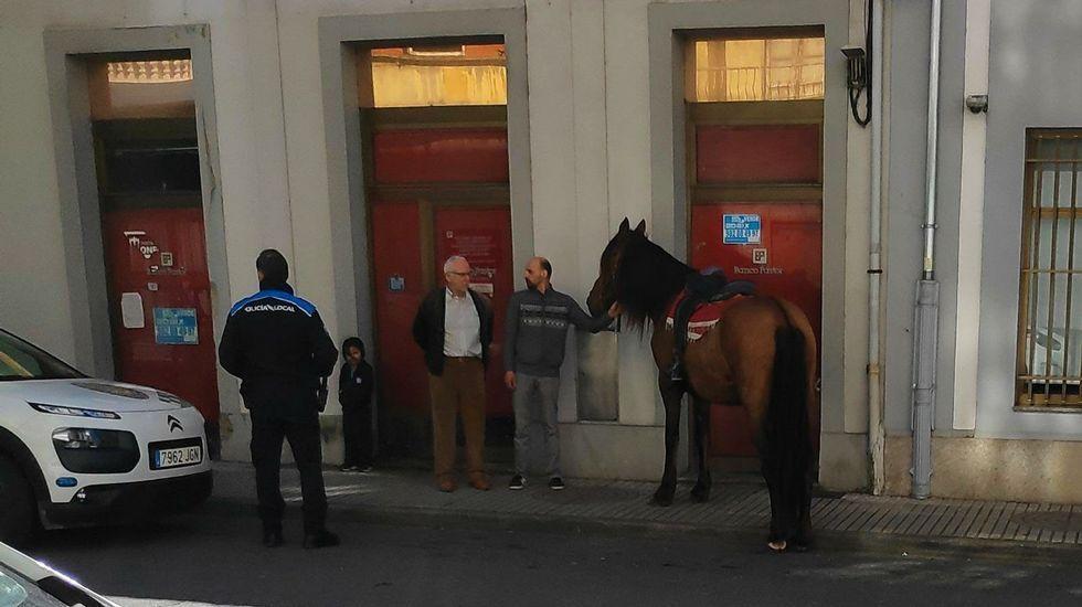 De noche jabalíes y de día caballos sueltos por Monforte.Imagen de archivo de una sesión de cuentacuentos a cargo de Fátima Fernández
