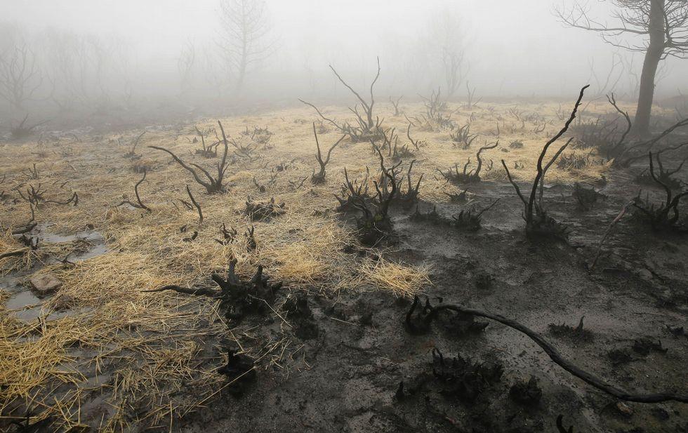 La paja busca evitar el arrastre de cenizas del incendio hacia los acuíferos de la zona.