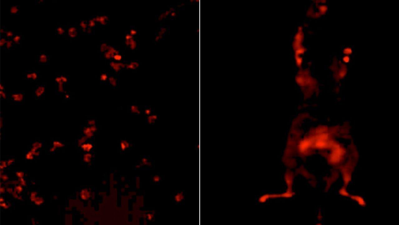 Los puntos iluminados indican falta de oxígeno en las células, un indicador de las células tumorales