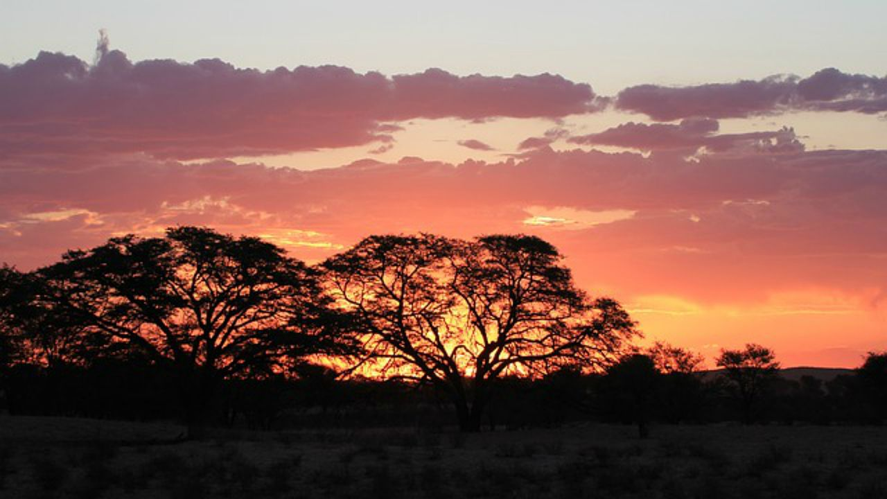 Parque Nacional de Kalahari
