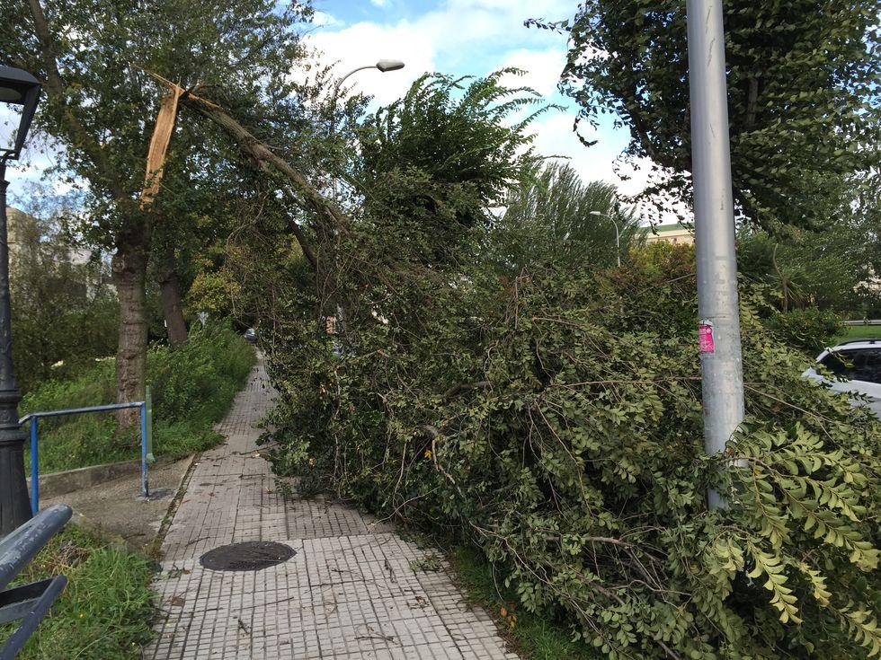 Árbol caído en la ronda de Outeiro