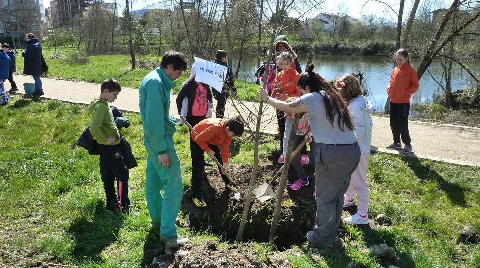 .Plantación de árbores organizada polo Concello de Monforte no paseo fluvial, entre os barrios de Cobas e A Pinguela