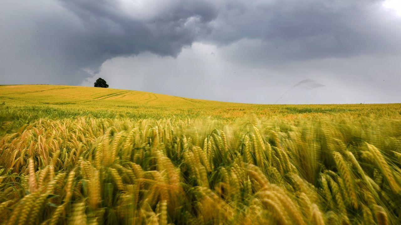Nubes de tormenta sobre un campo de cereales en Ravensburg (Alemania)