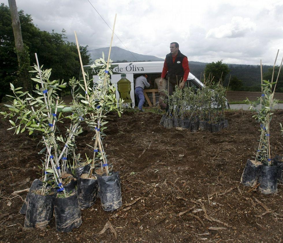 Así funciona un compostero comunitario.Plantación de olivos en la parroquia de Setecoros, similar a la que se hará en Pontevedra.