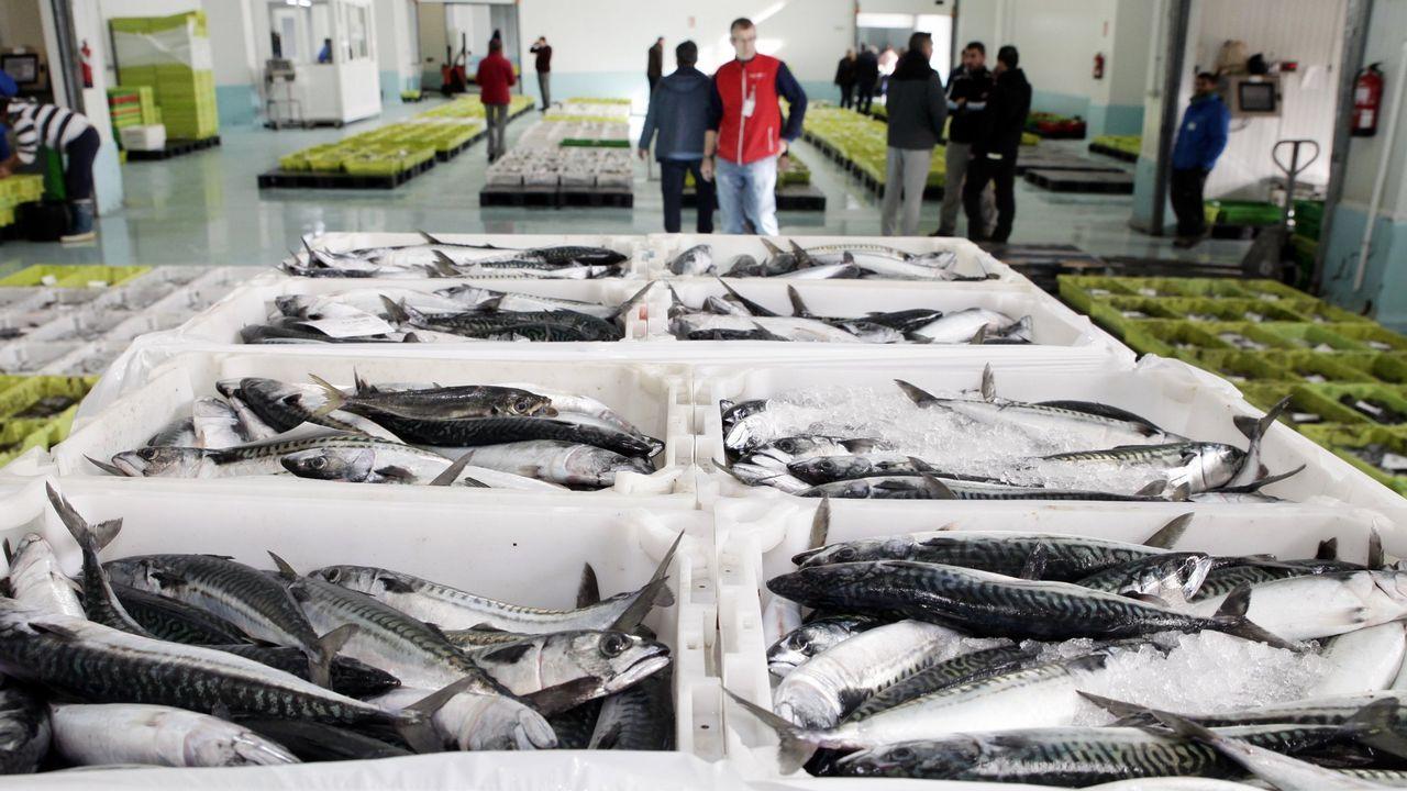 Suelta de un salmón en el río Esva.Katainen, vicepresidente de la UE, justificó los nuevos gravámenes
