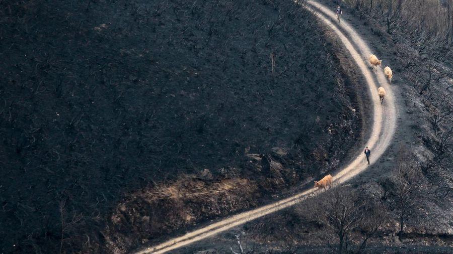 Galiza, incendios: La Xunta admite que en As Fragas do Eume han ardido 750 hectáreas.  - Página 5 LO23C4F2_211523